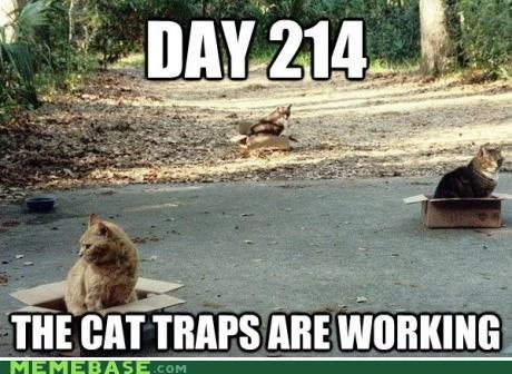 cat stevens harold and maude