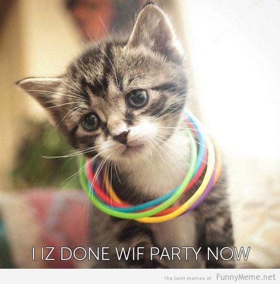 rave cat - meme