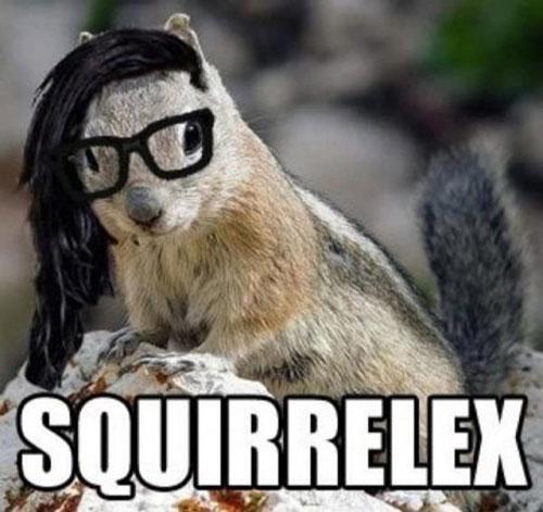 squirrelex - meme