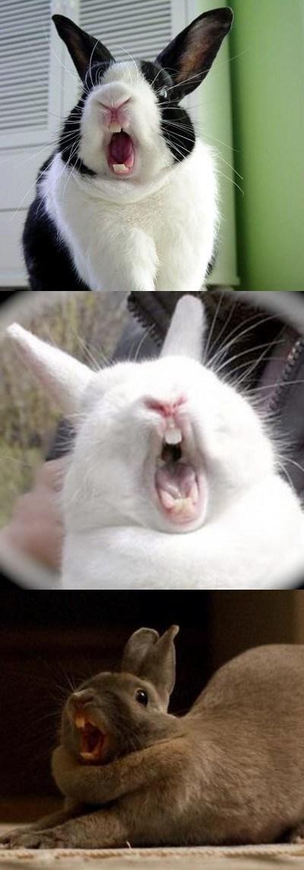 Заяц орет картинка