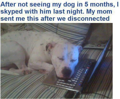 Skyping with dog - meme