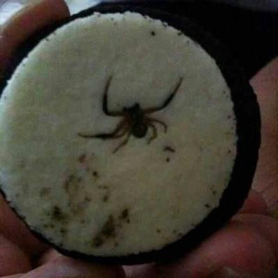 Spiders love oreos, you love oreos.  Common ground found? - meme
